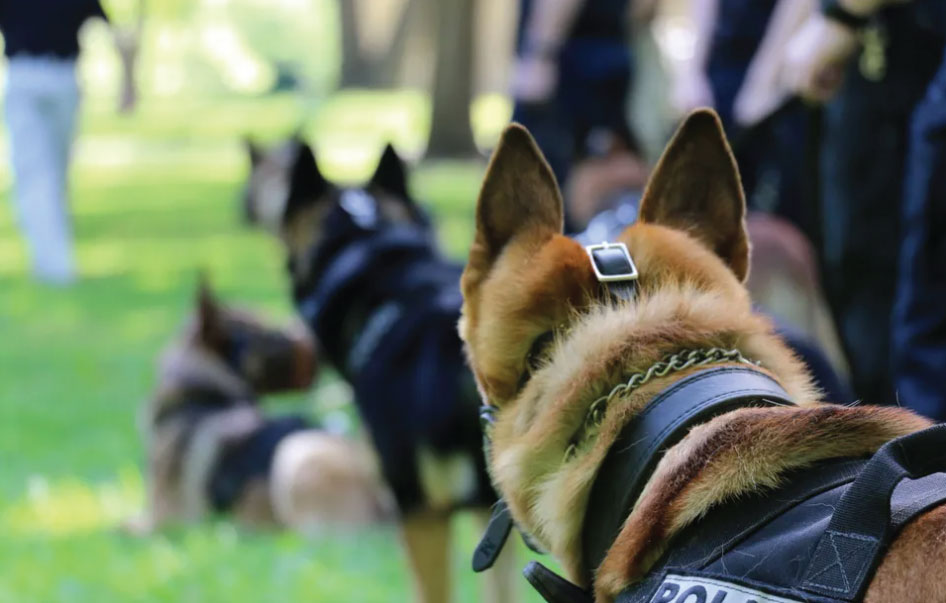 Canine Dog Training