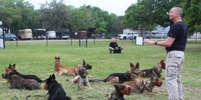 K9 Dogs For Sale